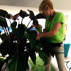 Toronto Maintenance Technician Caring for Plant