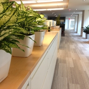 Aglaonemas in White Quadro in Mississauga Office