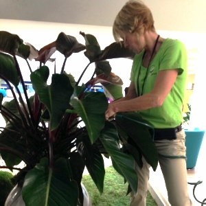 Janet Caring for Plant.JPG