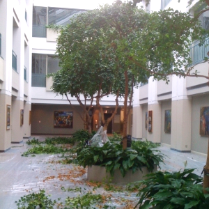 Large  Scale  Ficus tree Pruning