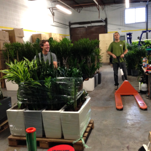 Loading office plants for delivery