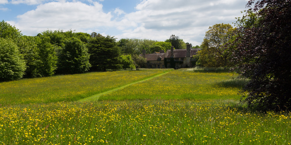 The North Meadow With Mown Paths and buttercups at Cothay Manor. Image: Chris Denning/ Verve Garden Design.