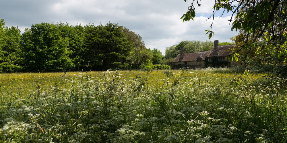 Meadow as far as the eye can see at Cothay Manor.   Image: Chris Denning/ Verve Garden Design.