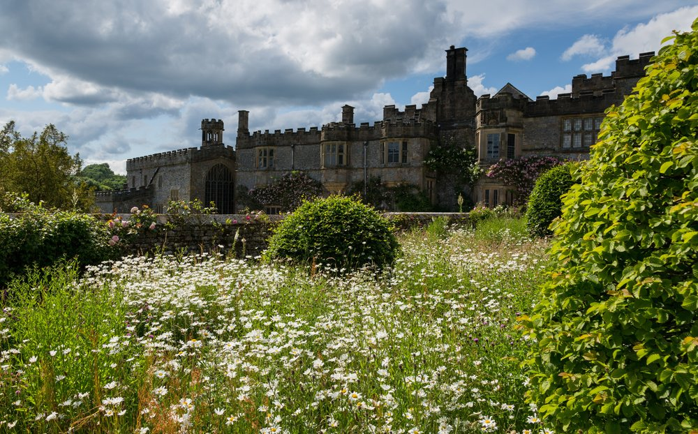 Ox-eye daisies (Leucanthemum vulgare) and Beech (Fagus sylvatica) topiary giving the Arne Maynard-designed borders a meadow-like feel at Haddon Hall. Image: Chris Denning/Verve Garden Design.