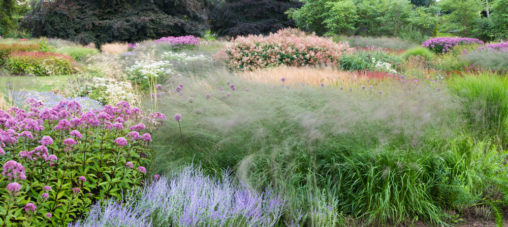 Piet Oudolf has used a series of mound shaped plants in large drifts to create easily-recognisable patterns at Trentham Gardens.  Image: Chris Denning/Verve Garden Design