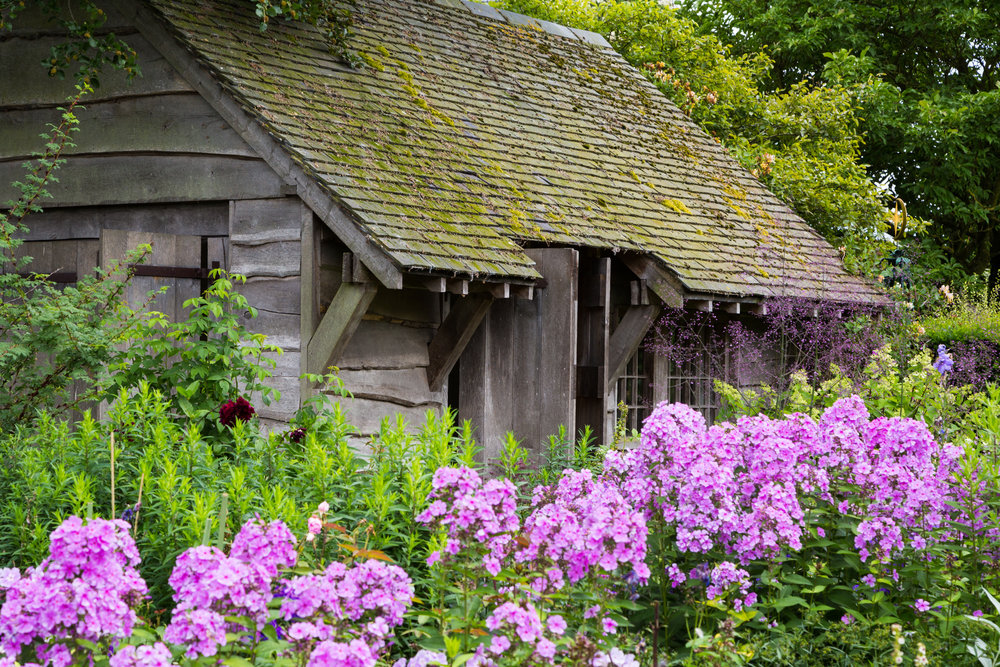 Phlox paniculata and Thalictrum delavyi in the Summerhouse Garden at Wollerton Old Hall. Image: Chris Denning/Verve Garden Design.