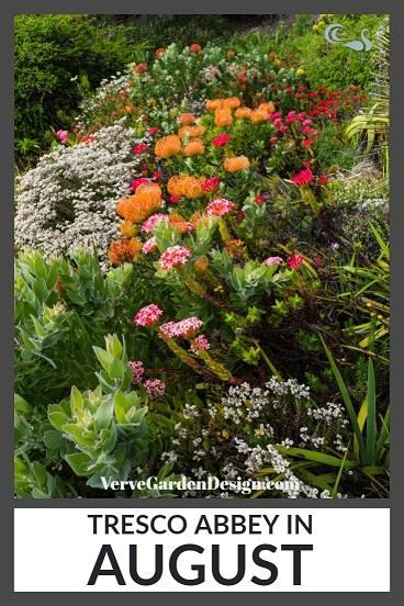 Protea Extravaganza at Tresco Abbey Garden.  Image: Chris Denning/Verve Garden Design