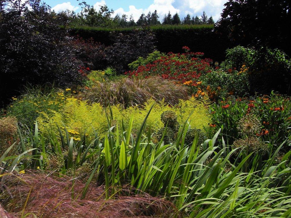 August Drama in the Rosemoor Hot Border.  Image: Lorraine Young /Verve Garden Design.