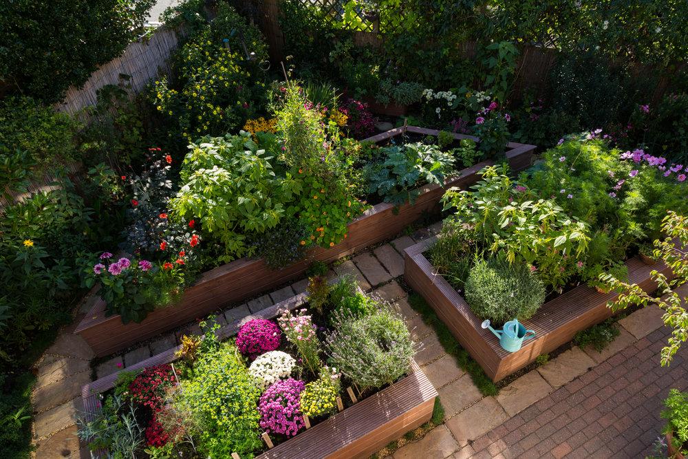 Wood raised bed kitchen garden made from deck boards. Designer: Lorraine Young. Image: Chris Denning/Verve Garden Design.