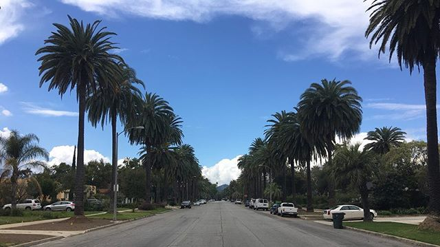 Scouting palm trees 🌴 in Pasadena and Altadena for new romantic comedy . . #locationscout #palmtrees #losangeles #filmmaking