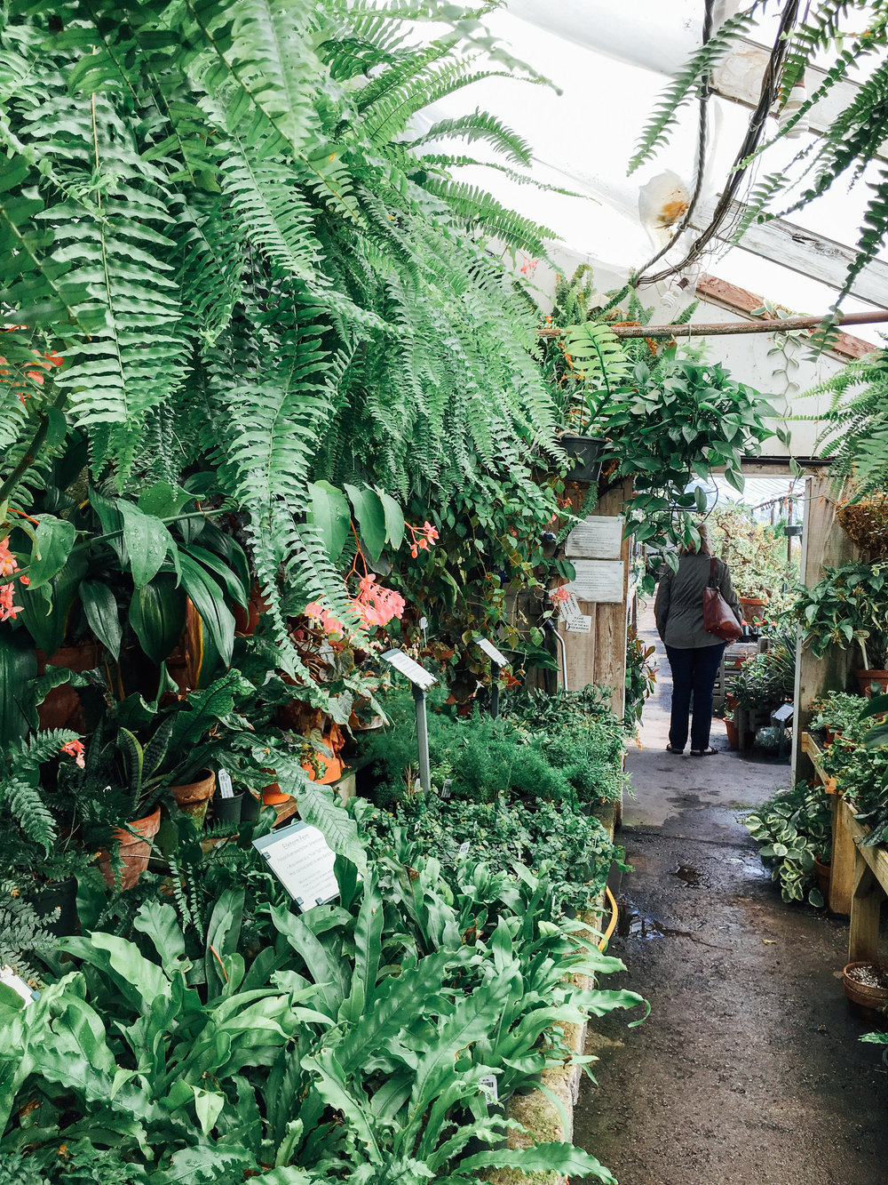 Peckham's Greenhouse - Little Compton Rhode Island