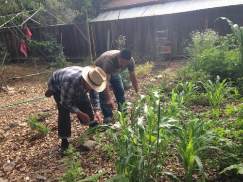 Weekly Garden Maintenance Workday