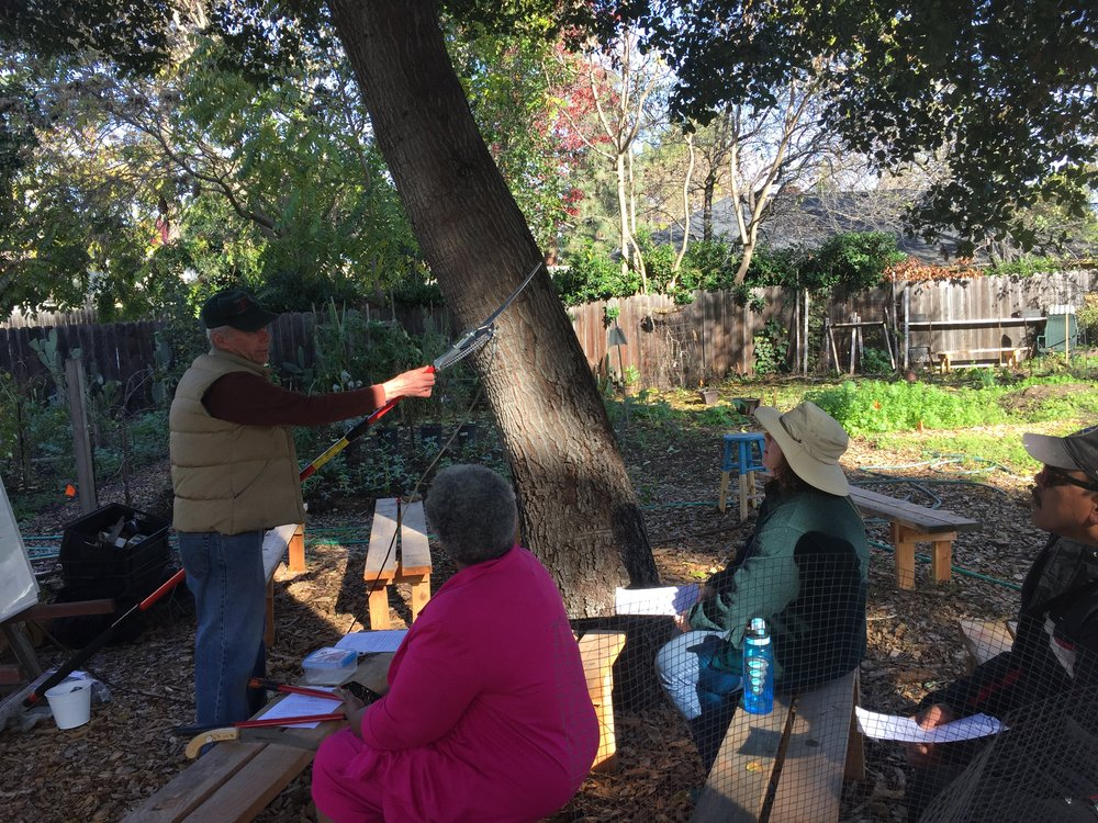 Copy of Tom_Brenda_Humberto_tree_pruning_12-3-16.jpg
