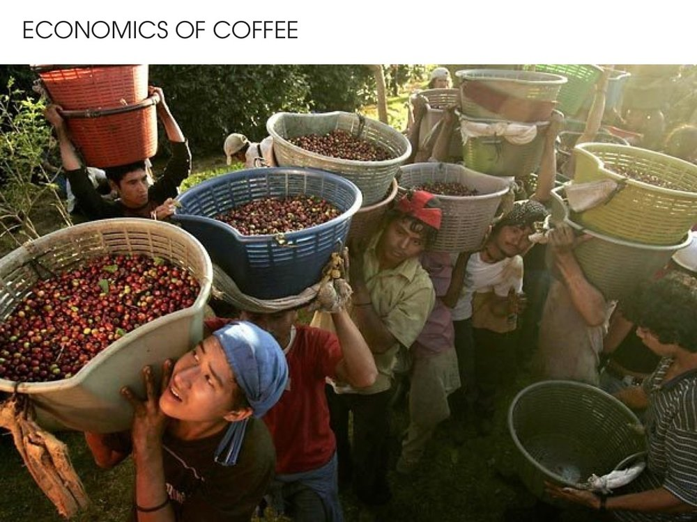 Economics of coffee