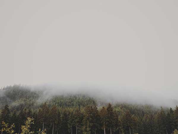 wood4.jpg