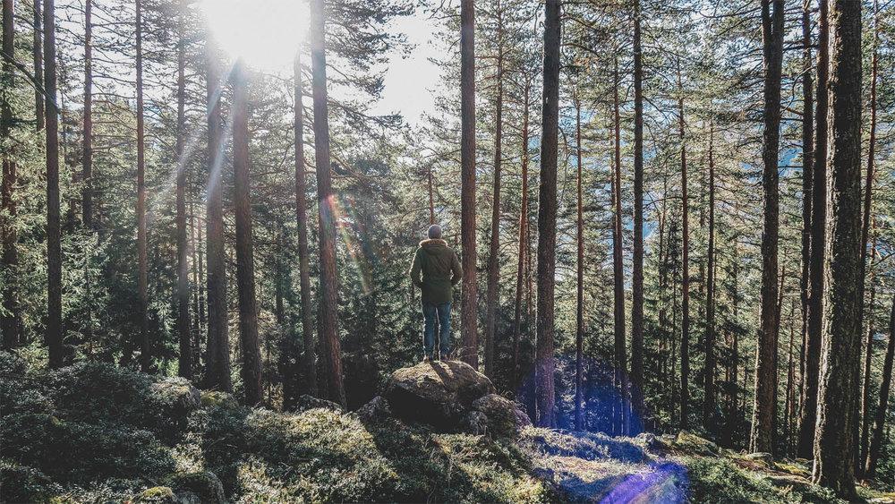 Blackbear Woods