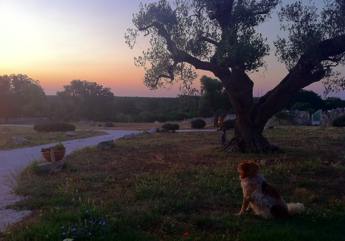 Puglia yoga retreat