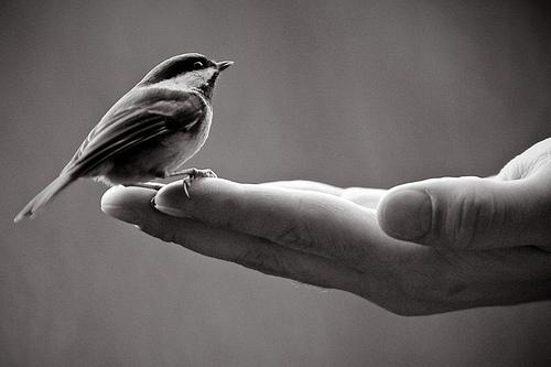 birdhand.jpg