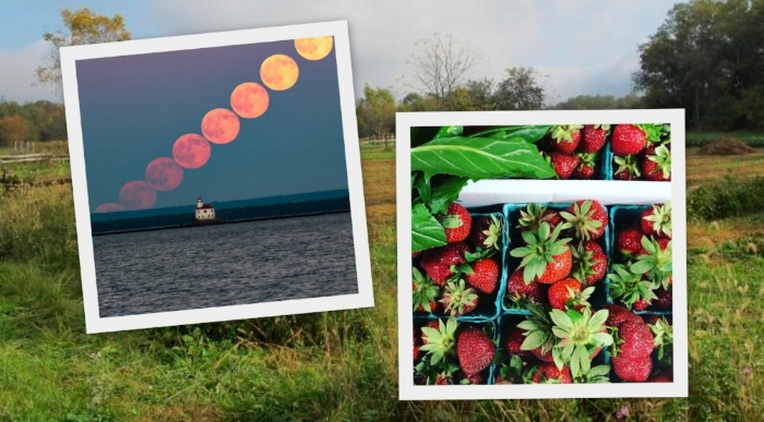 strawberry moon dinner collage.jpg