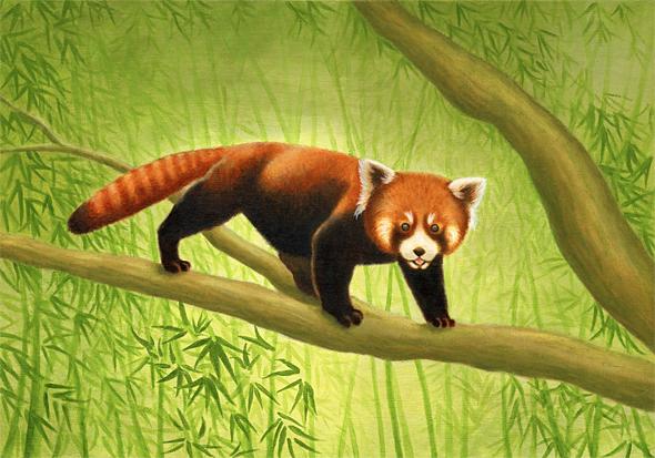 panda-CI.jpg