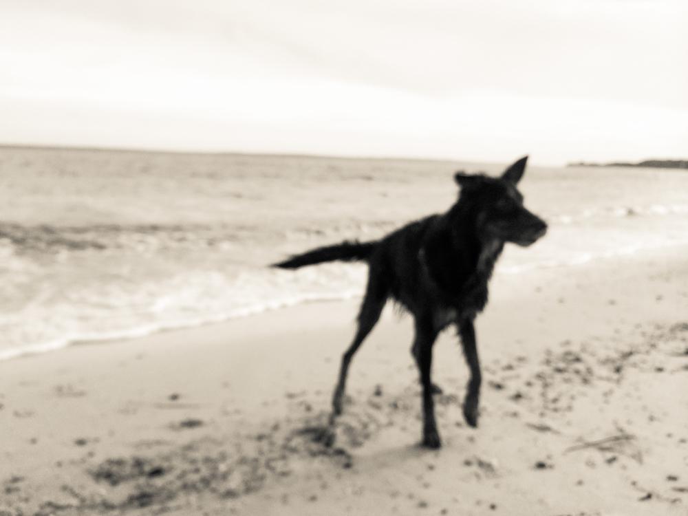 2. A Walk on the Beach, February 27, 2015