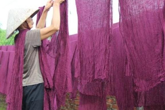 Purple_Binh_Minh_large.JPG