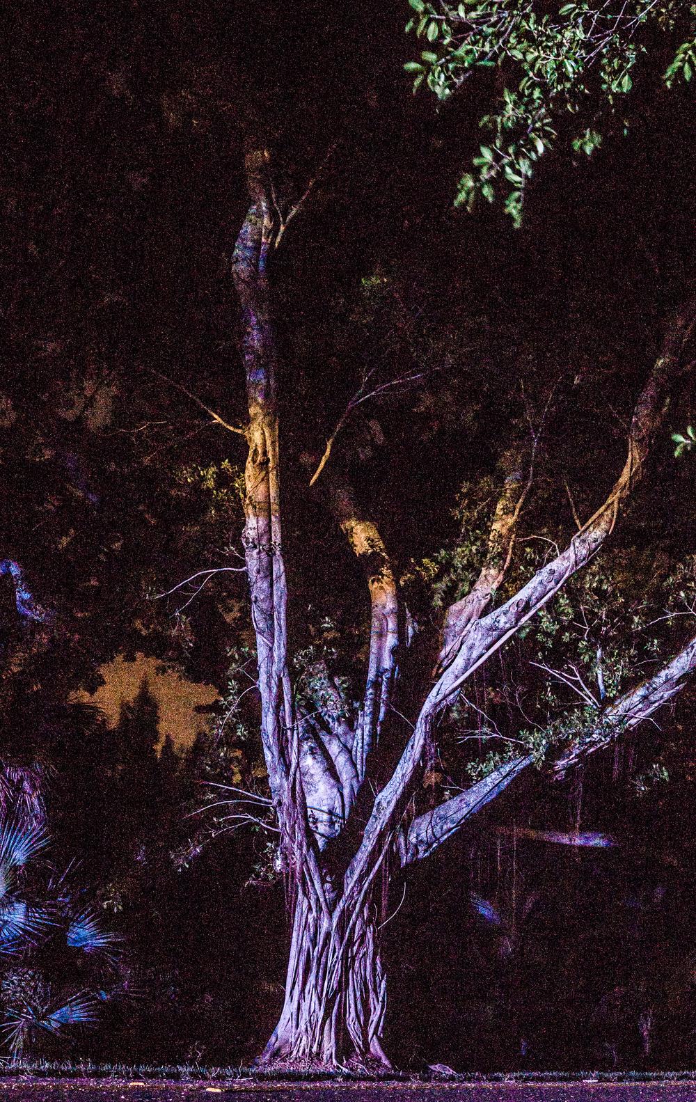 banyan tree (1).jpg