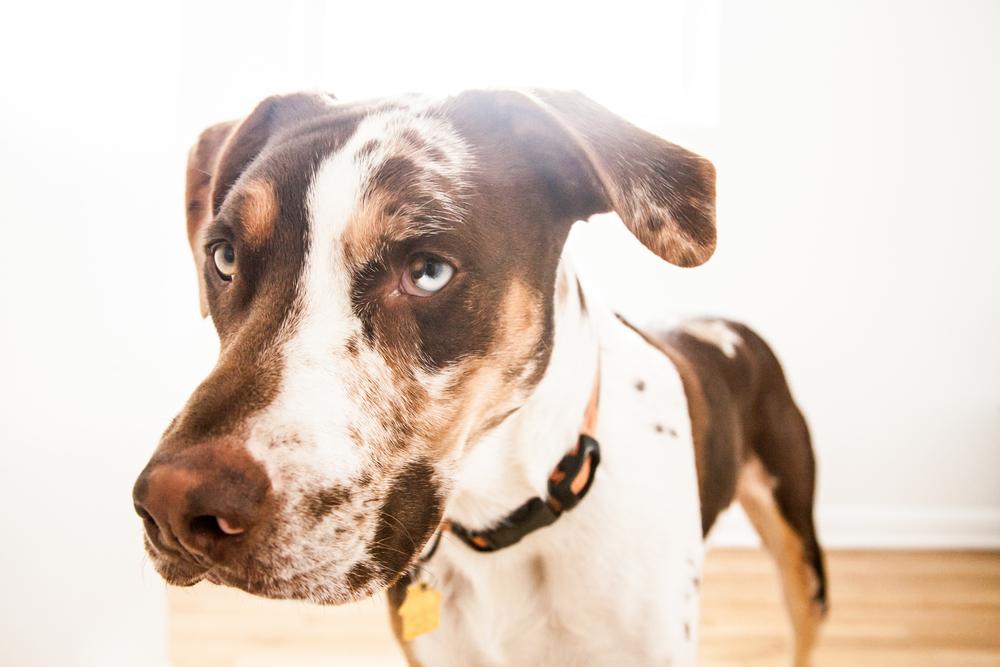 Denver dog.jpg