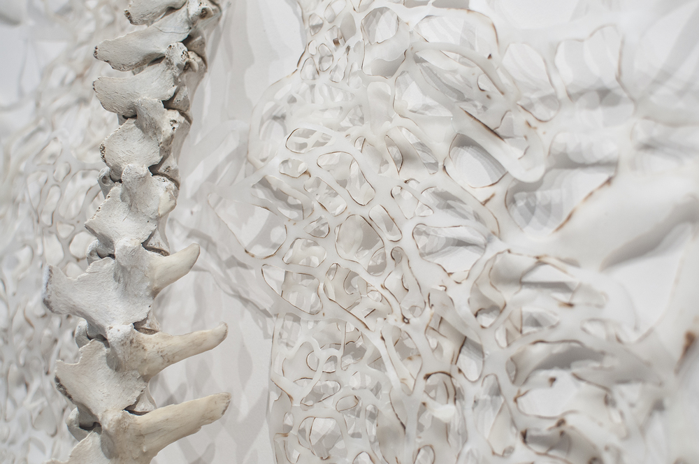 Flesh and Bone Detail  Handcut and Burnt Rice Paper, Beeswax, Bone  2013