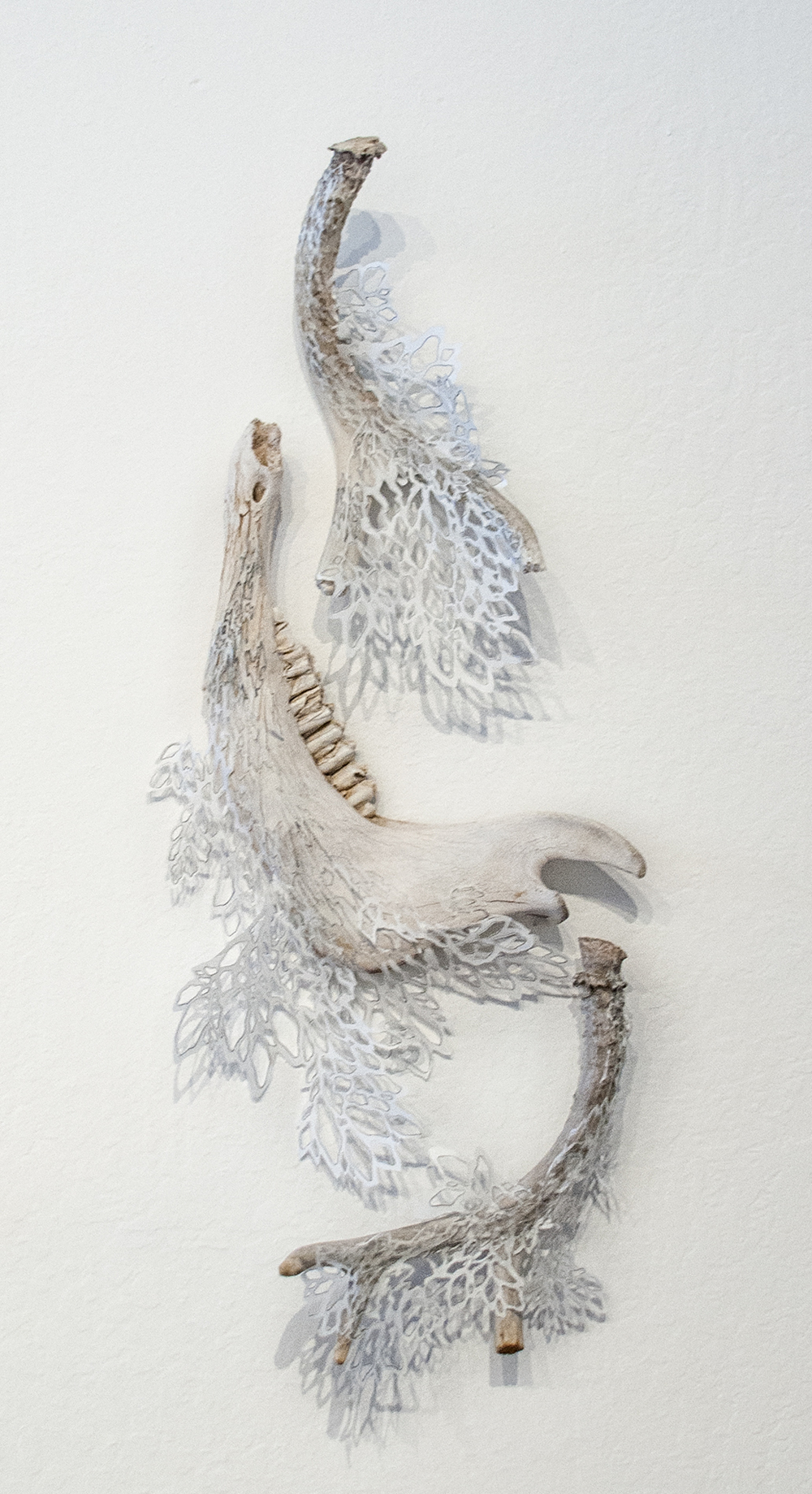 Growth In the Most Unlikely of Places  Bone, Handcut Rice Paper, Graphite  2014