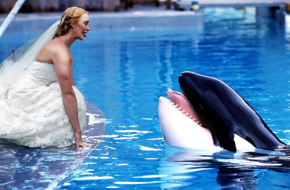 Free Willy_Working.jpg