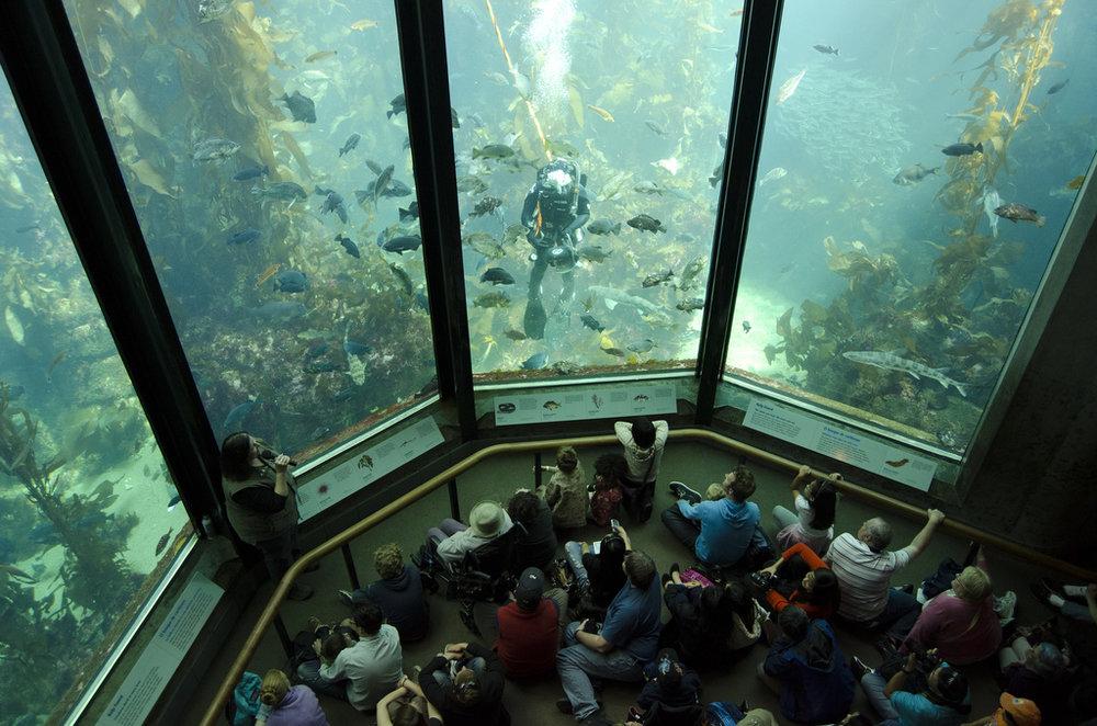 Monterey Bay Aquarium, 2013.
