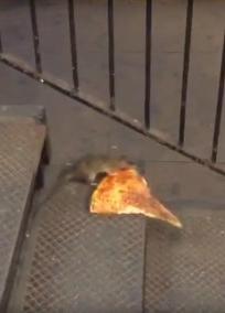pizza rat.jpg