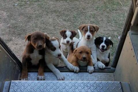 Photo from facebook.com/upsdogs
