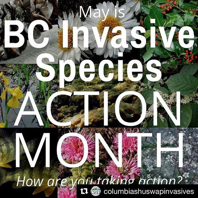 In Vancouver for the weekend and it just so happens to be Invasive Species Action Month in British Columbia. Check out @columbiashuswapinvasives to see how you can help! . . #bcinvasives #invasivespeciesremoval #invasivespeciescontrol #plantwise #growmeinstead #eatinvasive #invasiveeats