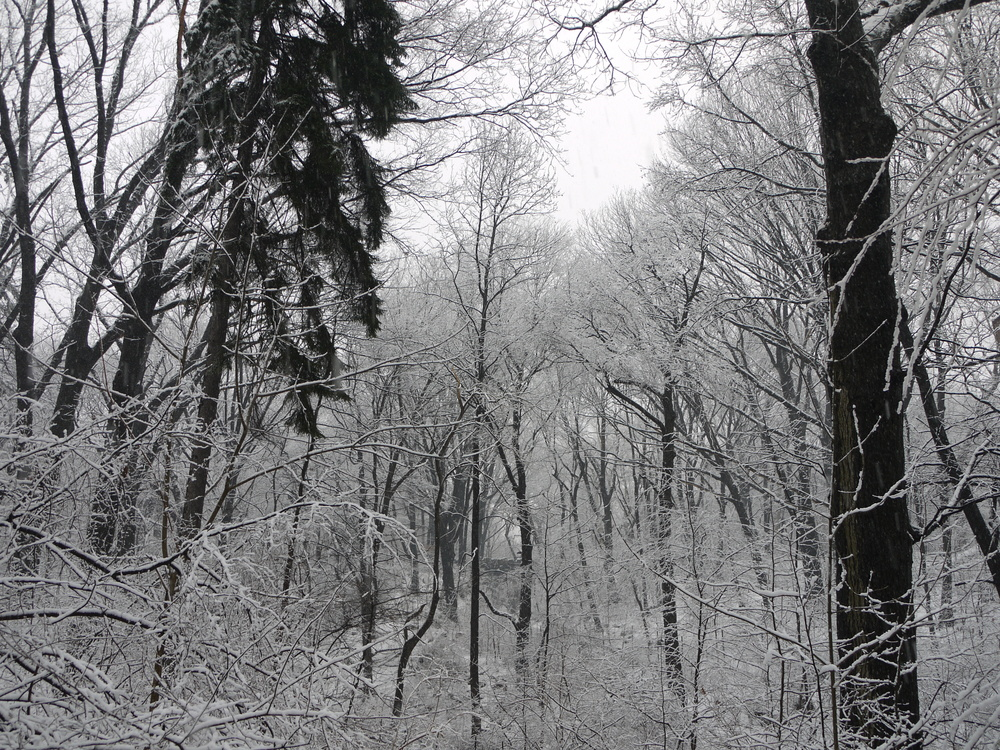 Deep in the woods in Prospect Park