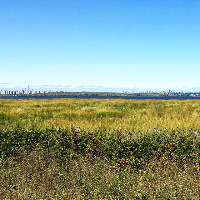 Wish I had a better camera than iPhone, but the view of the #manhattan #skyline #manhattanskyline across the #saltmarsh of #jamaicabay from the loop path #nofilter #queensny #bikenyc