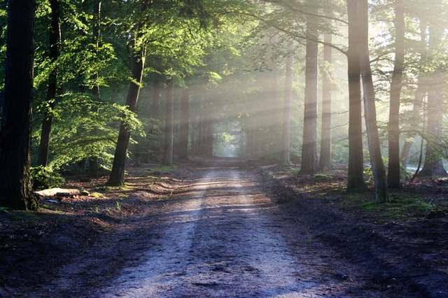 Road leading down a tunnel of trees with the sun shining through.