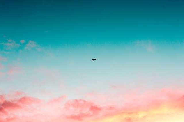 Bird flying through the sky wishing it was a man.