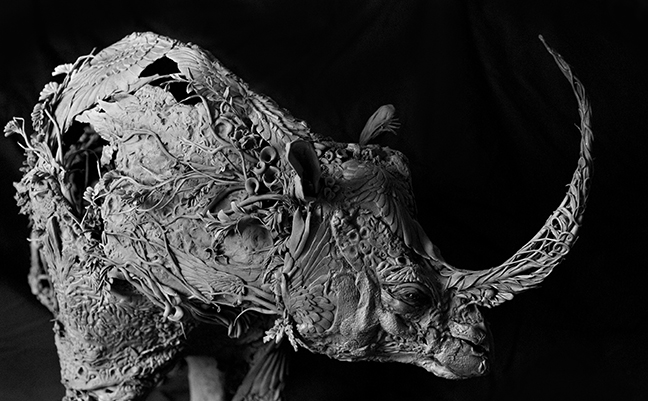 rhino9.jpg