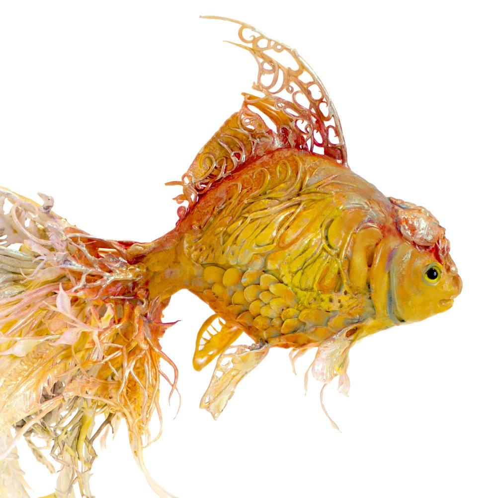 goldfish0.jpg