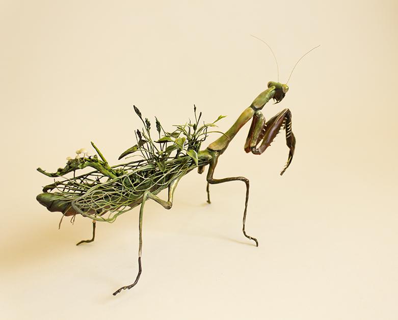 mantis4.jpg