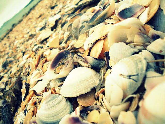 simpukoita+rannalla.jpg