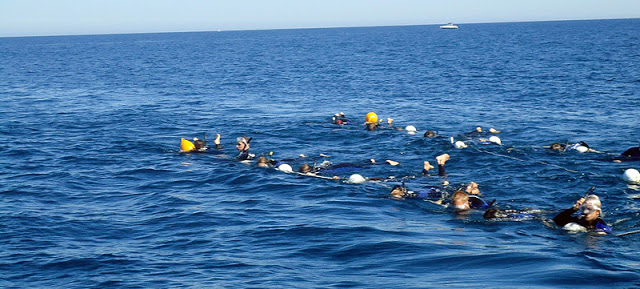 dolphin+swim+adelaide.jpg