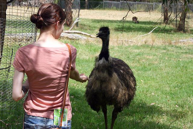 emu+cleland+park.jpg