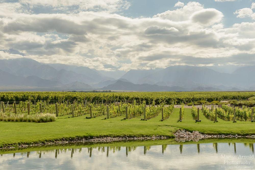mendoza wine scenery