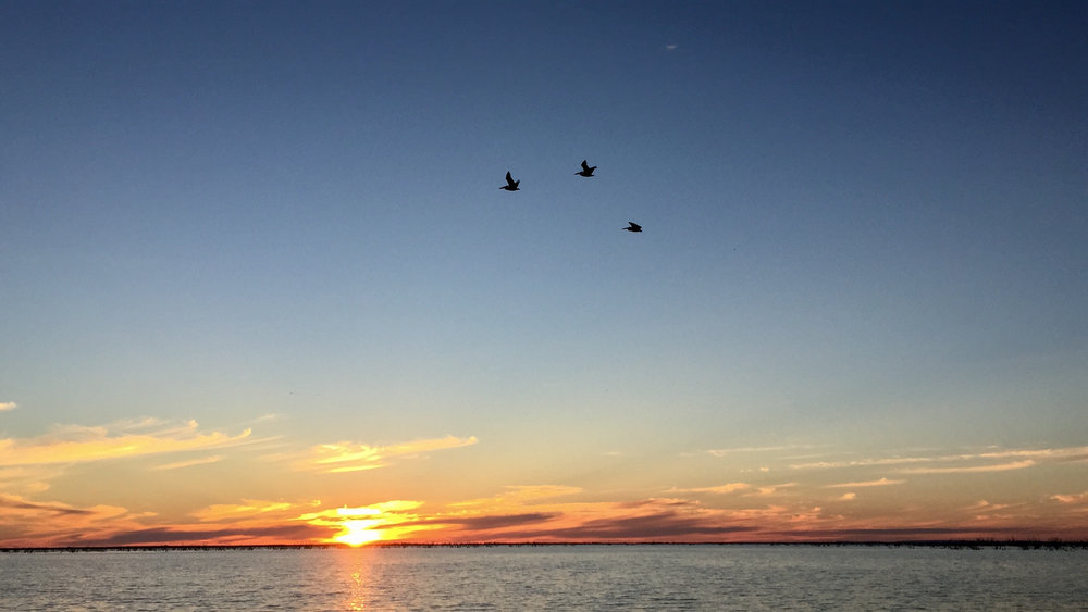 - Pelicans Flying Over Nice Sunset