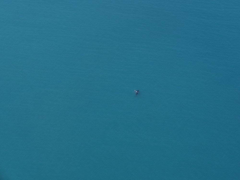 This is one the whales we saw from the plane.