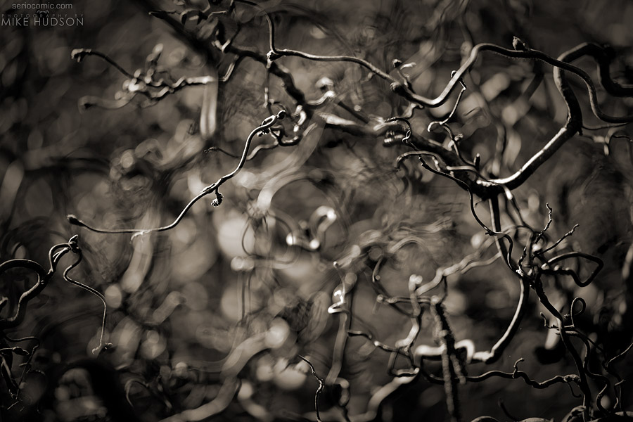 Tendrils ~ Mike Hudson