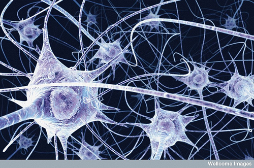 Illustration of Neurons ~ Benedict Campbell, Wellcome Images/CC